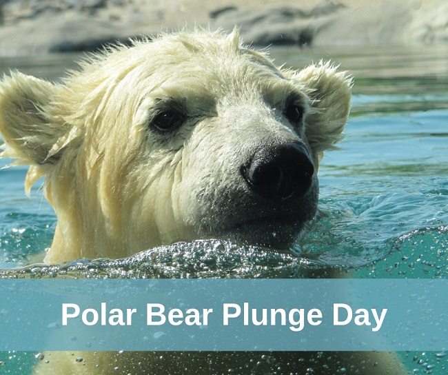 polar bear plunge day